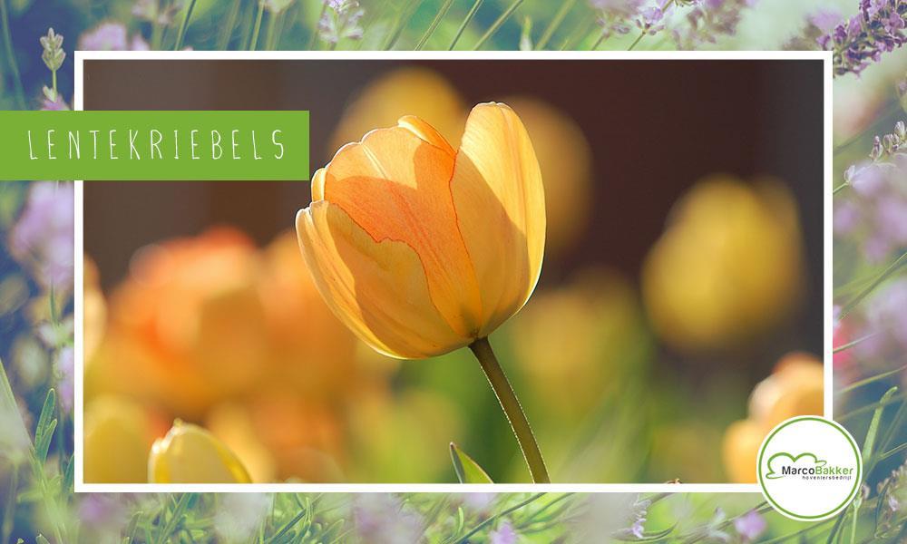 De astronomische lente staat voor de deur!